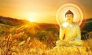 Thiền là sự sống của con người