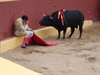 A Bullfighter, Faced With The Reality Of His Crimes
