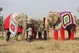 Animal Lovers Knitting Winter Jumbo Jackets for Abused Elephants in Mathura, India